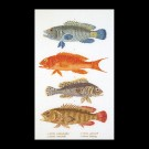 borduurpakket vissen
